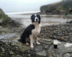 Guinness is Good For You (Bone Setter) Tags: border collie coast
