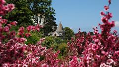 Perros-Guirec (claude 22) Tags: perrosguirec manoir couleurs colors trestrignel bretagne france fleurs flowers nature brittany breizh