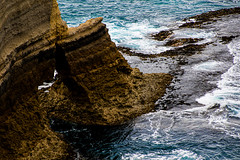 Ocean: beginning's end. (Ardan_Dojan) Tags: nature clarity ocean waves cliff furrows patterns textures rocks water kelp summer refreshing awesome cool love naturelover naturephotography trip seaside sea landscape landscapephotography travel travelling explore roadtrip
