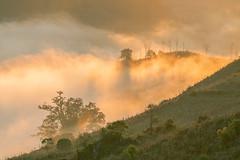 _MG_6234.0212.Tân Lập.Mộc Châu.Sơn La (hoanglongphoto) Tags: asia asian vietnam northvietnam northernvietnam northwestvietnam landscape scenery vietnamlandscape vietnamscenery mocchaulandscape nature naturelandscape sunrise clouds mountain flanksmountain vietnammountainouslandscape cloudsofmocchau canon canoneos5dmarkii canonef100400mmf4556lisusm tâybắc sơnla mộcchâu tânlập thiênnhiên thiênnhiênmộcchâu natureinmocchau bìnhminh bìnhminhmôcchâu mây mâymộcchâu núi sườnnúi phongcảnhvùngnúi topmountain dãynúi đỉnhnúi mâyluồnmộcchâu forest theforest rừng hoanglongphoto