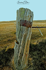 First Post this Decade (franklin331) Tags: 1942 april5th aspect backcountry barbedwire bliss blissphotographics cedar corner earlreynolds fence frame frankbliss franklinebliss grass image land landscape lichen photo plaque post ranchlands rural scenery scenic setpost sonyalpha western wyoming