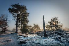 Cold ground beneath me, cold faces around me. (Ingeborg Ruyken) Tags: ochtend morning sunrise tree 500pxs cold natuurmonumenten boxtel natuurfotografie autumn fall kampina herfst