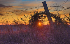 The last sunset of 2019. (wdterp) Tags: fence fencerow barbedwire sunset sun farm agriculture