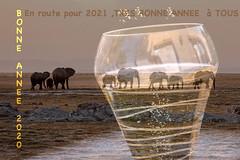 Bonne et heureuse année à tous (Hélène Baudart) Tags: doublexposure champagne elephants kenya annee explore