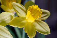 2020 #8 (David S Wilson) Tags: england flowers leica2845mmmacro olympuspenf ely cambridgeshire floral lightroom davidswilson