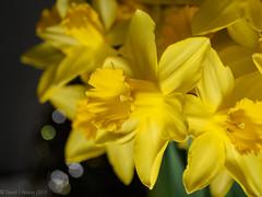 2020 #1 (David S Wilson) Tags: england flowers leica2845mmmacro olympuspenf ely cambridgeshire floral lightroom davidswilson