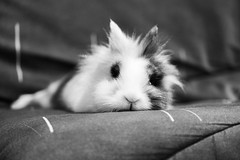 Happy new year !!! (uluqui) Tags: happy new year 2020 animal rabbit bunny lapin canon eos 6d 6dmkii 70200 fullframe blackandwhite bw noiretblanc bokehlicious