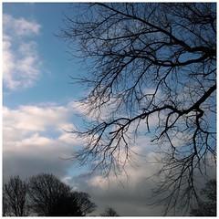 Winter sky II (metamodule) Tags: southport sigmadp2