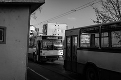 Rocar 217E trolleybus 0109 (WT_fan06) Tags: troleibuz targu jiu trolleybus dac rocar 217e romania photography nikon d3400 dslr vechi oldtimer retro vintage historic history heritage public transportation 0109 national gorj