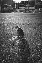 猫 (fumi*23) Tags: ilce7rm3 sony sel35f18f emount 35mm feline fe35mmf18 a7r3 animal parking bnw bw blackandwhite monochrome cat chat gato katze neko ねこ 猫 ソニー モノクロ