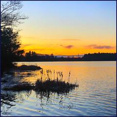 First Morning (Timothy Valentine) Tags: sunrise large silhouette iphone3651 sky 0120 2020 robbinspond newyear eastbridgewater massachusetts unitedstatesofamerica