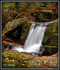 Lynn Camp Prong Cascades (pandt) Tags: lynncampprongfalls cascades lynncampprong waterfall falls tennessee greatsmokymountain nationalpark longexposure nature outdoor leaves rocks river beautiful beauty canon eos slr 6d flickr hiking trail hike outdoors recreation fall water outside vacation