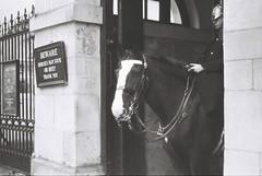 Horse Guard (goodfella2459) Tags: nikonf4 adoxsilvermax100 35mm blackandwhite film analog london horse horseguard city bwfp