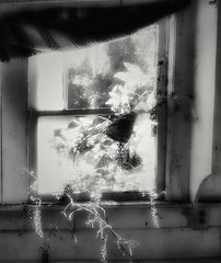 forgotten resolutions....(HWW) (BillsExplorations) Tags: windowwednesday window blackandwhite monochrome abandoned forgotten old resolutions abandonedhouse newyear coalmining muddy hww