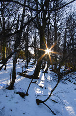 Etoile des neiges, mon coeur amoureux ...... (Jean-Michel Bolle) Tags: hiver vosges hohneck neige soleil