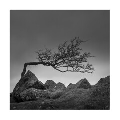 Ladies Curtsy! (Nick green2012) Tags: tree square blackandwhite landscape silence minimal dartmoor