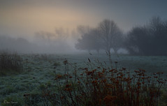 In the air (Through Bri`s Lens) Tags: sussex worthing frosty misty atmosphere winter wintersun brianspicer canon5dmk3 canon1635f4
