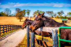 Thoroughbred Horses at Old Friends Farm (JuanJ) Tags: nikon d850 lightroom photoshop luminar art bokeh lens light landscape happy naturephotography nature people white green red black pink skyportrait location architecture building city square squareformat instagramapp shot awesome supershot beauty cute new flickr amazing photo photograph fav favorite favs picture me explore interestingness friends dof sunset sky flower night tree flowers portrait fineart sun clouds fx thoroughbred horse farm equine gotogeorgetown kentucky oldfriendsfarm kyhorses betterinthebluegrass nikonfxshowcase