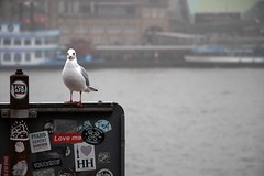 Love Me (Travel Marco) Tags: germany hamburg canon bird fog river love loveme gabbiano seagull animals animal colours