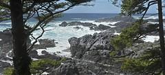 20190521D8E_7891 PanoFLR (cisco42) Tags: bc britishcolumbia canada storm wildpacifictrail ucluelet westcoast vancouverisland waves rocks rugged hiking cedertrees mistfog