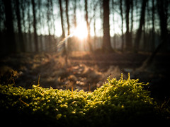 Nature (matwolf) Tags: sun nature wood outside forest sonne natur outdoor color ngc wald trees arbres bäume