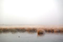 01.01.2020 (.rog3r1) Tags: pietzmoor niedersachsen landscape