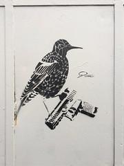 9Tram Fjellveien December 2019 (svennevenn) Tags: 9tram stencils bergen gatekunst streetart pistols pistoler fugler birds