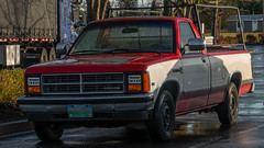 1987 Dodge Dakota (mlokren) Tags: 2020 car spotting photo photography photos pic picture pics pictures pacific northwest pnw pacnw oregon usa vehicle vehicles vehicular automobile automobiles automotive transportation outdoor outdoors fca psa chrysler mopar 1987 dodge dakota pickup truck red white