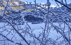 Escaping the castle, the last hurdle (PeterThoeny) Tags: grüsch schiers switzerland prättigau grison graubünden alps swissalps valley mountain twig tree treebranch bush snow winter frost ice icecold freezing clear day outdoor sony sonya6000 a6000 selp1650 3xp raw photomatix hdr qualityhdr qualityhdrphotography fav100