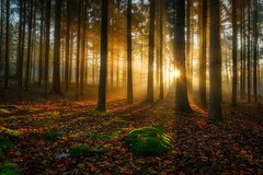 Fresh Start (Ellen van den Doel) Tags: forest nature nederland bos netherlands trees mist herfst outdoor bomen licht november2019 natuur fall light landschap autumn landscape bergenopzoom fog