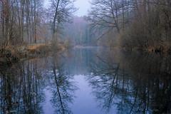 Winter fog... (mike   MKvip.photo) Tags: sony⍺7rmarkii sony⍺7rii sonyilce7rm2 sonyalpha7rm2 sonyalpha sony alpha emount ⍺7iii ilce7rm2 ibis sigmafe50mmƒ14dghsm a sigma art 50mmƒ14 closeup macro makro handheld availablelight naturallight backlight backlighting dreamy soft zen nature water lake pond reflections landscape waterspae forest trees leaves winter hagenbach germany europe mth mkvip sigmafe50mmƒ14dghsm art ngc npc