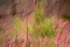 Sapling (DavidSenaPhoto) Tags: fujinon35mmf14 color tree multipleexposure fuji xt2 intentionalcameramovement impressionisticphotography fujifilm impressionism