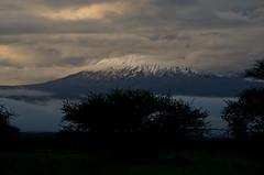 Kilimanjaro at dawn (Prajna Nairobi) Tags: kilimanjaro mountainsofafrica amboseli dawn snowcappedmountainpeak volcanicmountains landscape