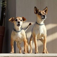 Giorgina e Pesca (CarloAlessioCozzolino) Tags: pesca giorgina cani dogs animali animals