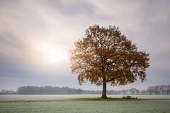 THE Tree and a sunrise (frank_w_aus_l) Tags: natur tree sunrise sunlight nature dawn sky blue fog nikon d810 pce tilt shift 2435 nikkor dorsten haze sun light winter autumn leaves frost