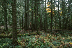 ~ (Cassie D.) Tags: forest nature tree trees bc britishcolumbia canon 6d canon6d vsco vscofilm outside outdoors