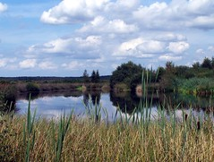 Acidic Pool (ERIK THE CAT Struggling to keep up) Tags: whixallmoss shropshire landscape water