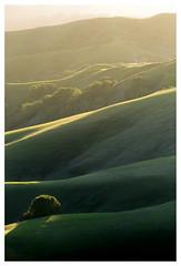 (Glenn Chickering) Tags: lastrampas sunset rollinghills california californiahills danville ca light goldenhourlight tree greenhills canon6d ebrpd