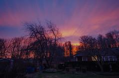 Clouds like an aurora (RdeUppsala) Tags: cielo sky moln nubes himmel clouds atardecer sunset solnedgång ricardofeinstein trees träd twilight trädgård forest bosque uppland uppsala sverige suecia sweden naturaleza nature natur