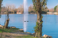 """""""El Soto"""" Natural Park (Miguel Ángel Prieto Ciudad) Tags: outdoors photography sky fountain water tree lake scenics nature day pond public park beauty in mostoles madrid landscape sonyalpha alpha3000"""