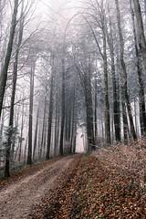 Cold Forest (Role Bigler) Tags: baum classicneg emmental fujifilmxpro3 fujinonxf1855mm1284rlmois landschaft mist natur nebel tree weg alley cold fog forest landscape nature nopeople schweiz suisse svizzera switzerland wald way wood