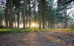 Woodland sunburst (Obas123) Tags: woodland forest nature landscape sony a7r2 a7rii zeiss fe 1635mm f40 variotessar