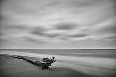 NewYears-2020-1 (Bryan N) Tags: winter lake erie port bruce black white water drift wood logs