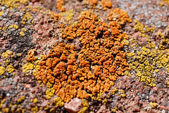 Lichen Macro at Red Rocks (Skylar L. Primm) Tags: lichen colorado redrocks sedimentary rock sandstone macro