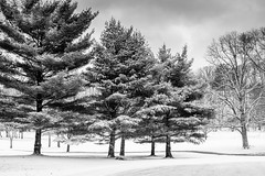 Powdered Sugar (Eric Tischler) Tags: snow trees bw ohio golf course little met winter cold