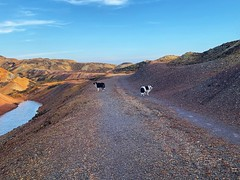 At the copper mines (David JP64) Tags: bordercollies coppermines anglesey