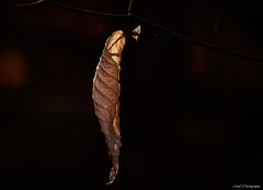 Natures Power in the Golden Hour (annedphotography1) Tags: leaf single negativespace macro shadows one nature
