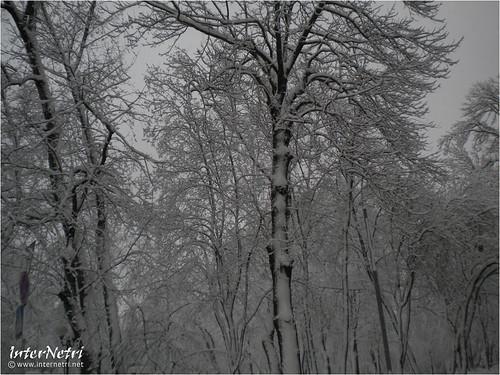 Київ у снігу. 2012 039 InterNetri Ukraine