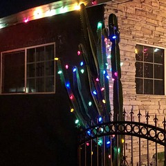 fullsizeoutput_a228 (lnewman333) Tags: highlandpark losangeles nela northeastlosangeles socal southerncalifornia usa ca christmas decorations festive lights night evening christmasdecorations cactus