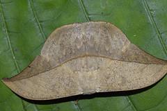 Nachtfalter #2 (RiversideMovie&Pictures Wildlife) Tags: nachtfalter moths costarica wildlifephotograph